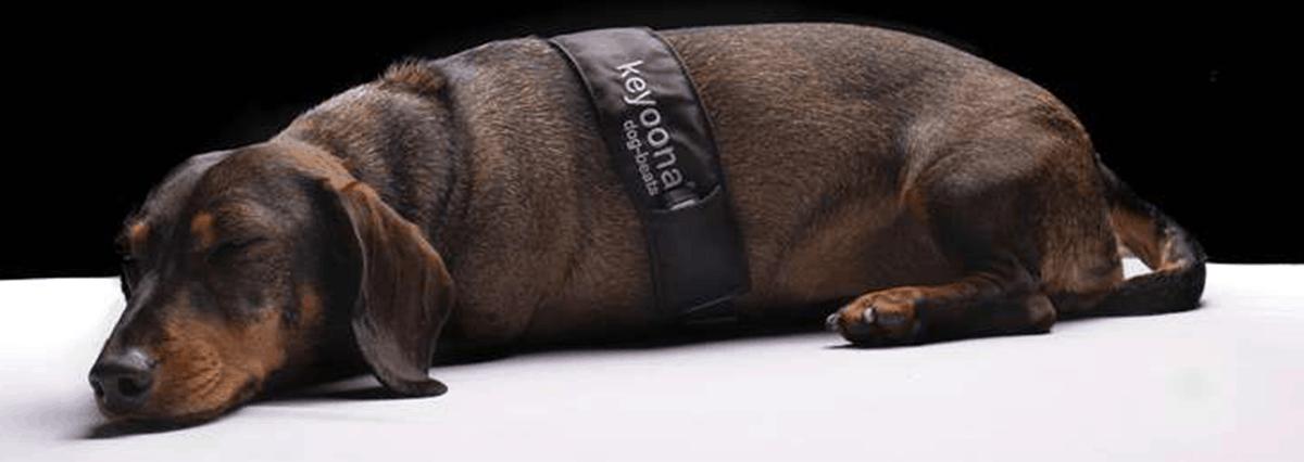 gestressten Hund beruhigen mit den Dog Beats von Keyoona